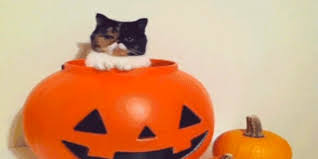 pet halloween costumes uk 21 amazing gifs of dogs and cats in halloween costumes huffpost uk