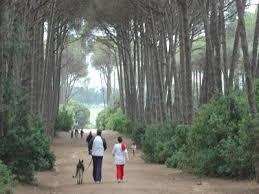 Forêt de Bouchaoui-Alger