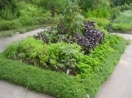 ornamental herb garden design fasci garden