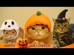 Happy Halloween Meme - happy halloween 9 cats lolcats know your meme