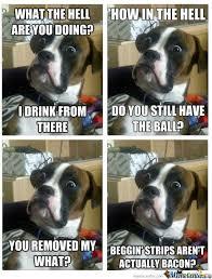 Suprised Meme - surprised dog is surprised by brook meme center