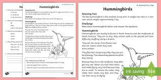 hummingbird comprehension activity sheet worksheet year 1