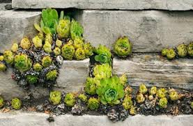 Rock Garden Succulents Landscaping Garden Design With Succulents Lovetoknow