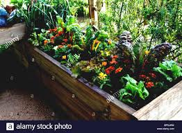 Urban Vegetable Garden by Small Urban Vegetable Garden In Enclosed Raised Beds Stock Photo