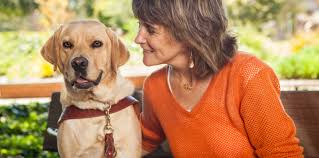 How Do Blind Dogs Know Where To Go Guide Dogs For The Blind Programs For The Blind