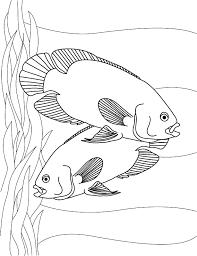 fish month 3 2015 aquatic creations group
