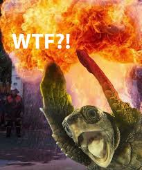 Wtf Boom Meme - image 15863 wtf boom know your meme