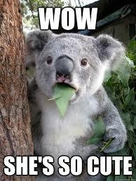 So Cute Meme - wow she s so cute amazed koala quickmeme