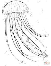 jelly fish coloring free download