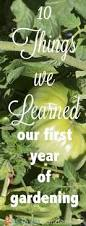 Gardening For Beginners Vegetables by Best 25 Gardening For Beginners Ideas On Pinterest Vegetable