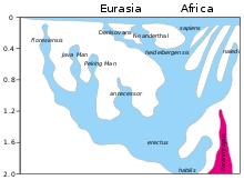 homo sapiens wikipedia