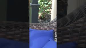 ground hog in our backyard youtube