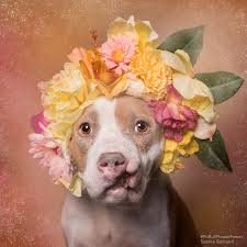 Flower Power Nyc - adding these flowers to your pup u0027s photos can save dogs u0027 lives