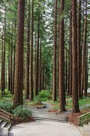 redwood forest wedding venue uc berkeley botanical garden wedding venue mather redwood grove
