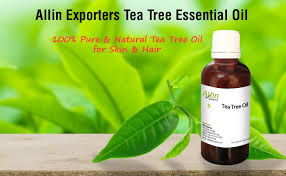 buy allin exporters tea tree essential for skin hair and acne