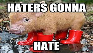 Funny Pig Memes - 15 very funny pig memes funny pigs memes and animal
