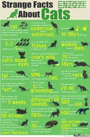 Cat Facts Meme - cat facts for all you cat lovers by alexknight97 meme center