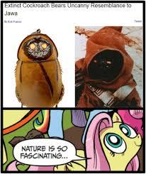 Meme Comic Jawa - 334537 exploitable meme fluttershy jawa meme nature is so