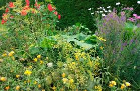 top 10 perennial ornamental vegetables permaculture magazine