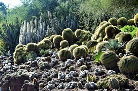 desert garden at the huntington library u2013 gardeninacity