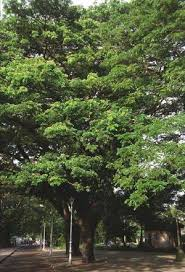 a few of our favourite trees the hindu