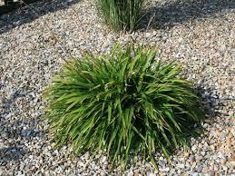 Pflanzen Fur Japanischen Garten Moderne Renovierung Und Innenarchitektur Tolles Tolles
