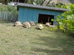 photo gallery u2013 turtle u0026 tortoise rescue