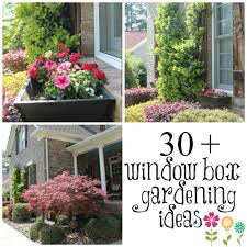Box Gardening Ideas Wow Your Windows With Window Boxes Debbiedoos
