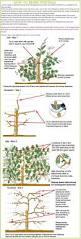111 best jardin images on pinterest japanese gardens