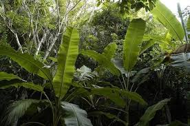 difference rainforest jungle quora