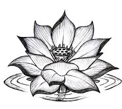 25 best elephant lotus flower and butterfly images on