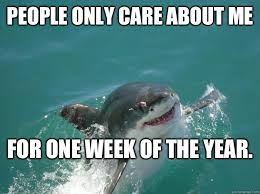 Funny Shark Memes - 40 most funniest shark meme pictures and photos