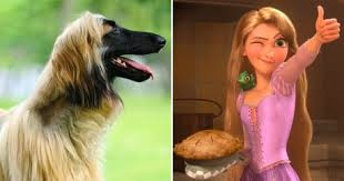 afghan hound look alike breeds 8 dog breeds that perfectly represent disney characters dogtime