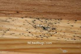 What Kills Bed Bug Eggs Dr Bed Bug Free Education Material On Bed Bugs Cimex