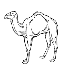 free printable camel coloring pages kids