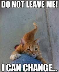 do not leave me cat meme cat planet cat planet