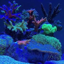 Floating Aquascape Reef2reef Saltwater And Reef Aquarium Forum - 768 best meerwasseraquarium images on pinterest saltwater