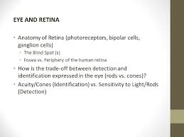 What Is The Blind Spot Eye And Retina What Is Light Where Does It Fit Into The Spectrum