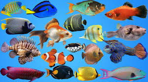 learn sea animals name pets for kids top fish pets nursery
