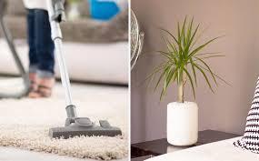 purifier l air d une chambre 8 façons de purifier l air de sa maison