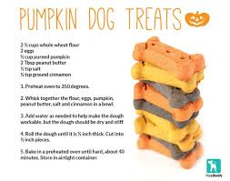 recipe for dog treats easy dog treats recipes food photos