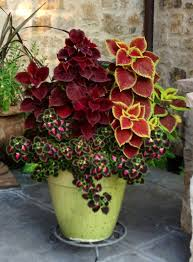 Summer Weight Garden Fabric - best 25 potted plants ideas on pinterest outdoor potted plants