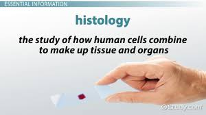 histology technician certification and certificate program info