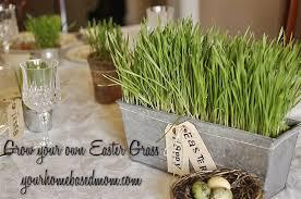 bulk easter grass grow your own easter grass your homebased