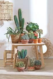cactus home decor the cactus in interior decoration is trendy home decor ideas