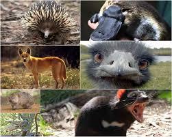 imagenes animales australia 10 animales únicos de australia revuo