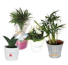 plante bureau plante de bureau personnalisée du bien être dans les espaces de