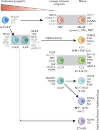 Ncr Trail Map Development Of Innate Lymphoid Cells Nature Immunology