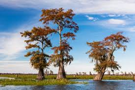Louisiana Travel Budget images National parks in louisiana travel channel jpeg