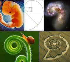 golden ratio dna spiral the golden ratio of life gnosticwarrior com